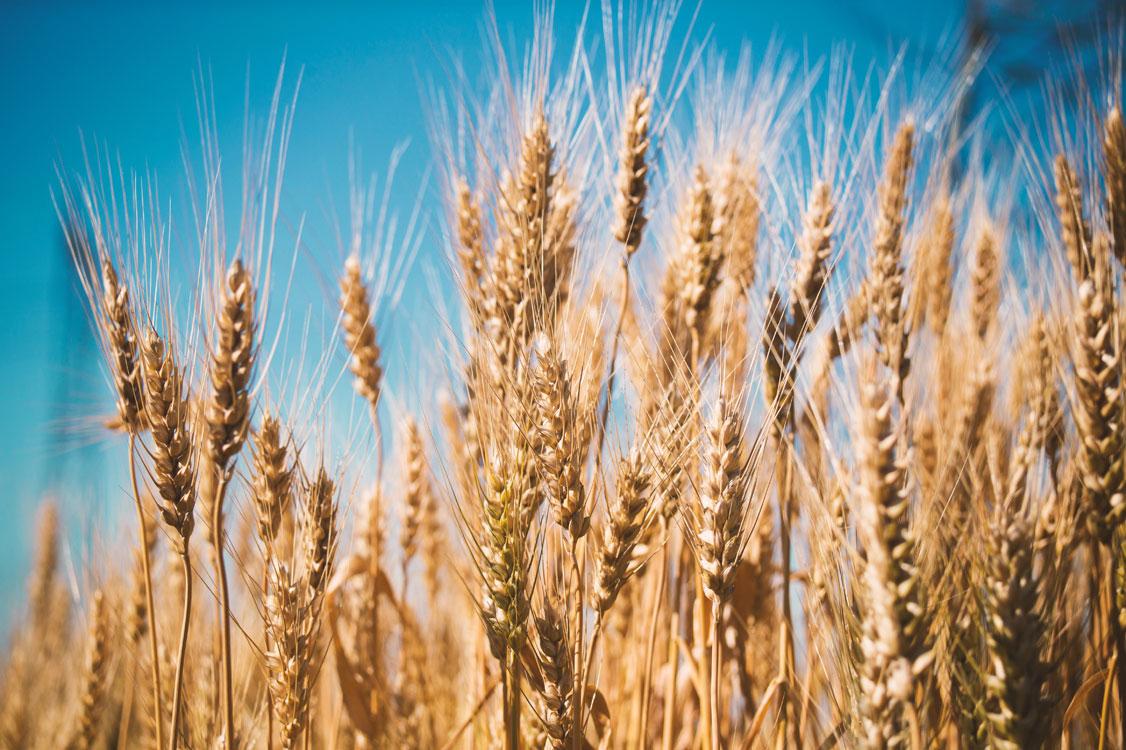 تهیه محصولات از مرغوب ترین دانه های موجود